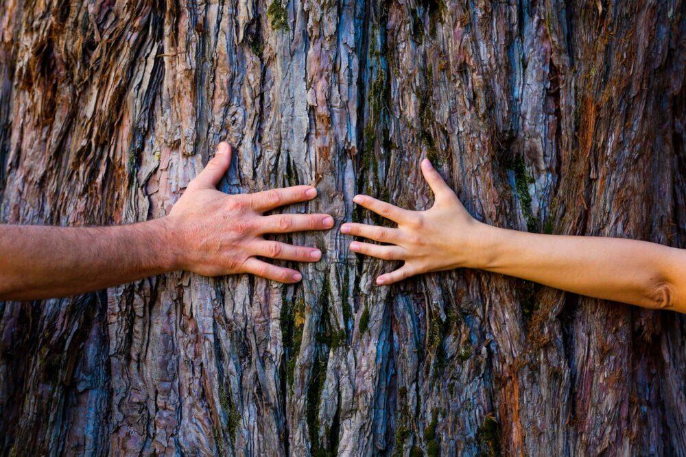 eurocase-benefici del legno